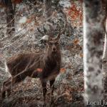 森で出会った牡鹿